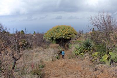 Marche consciente et Yoga du Son à La Palma ( îles Canaries )