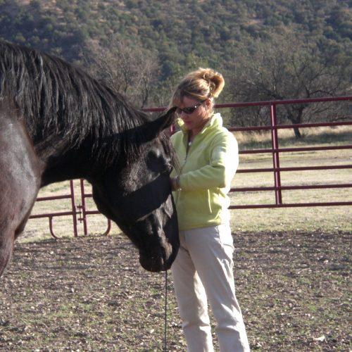 Pourquoi travailler avec les chevaux en développement personnel ?