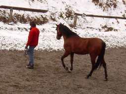Stage mieux être et développement personnel par le cheval-Rhône-Alpes