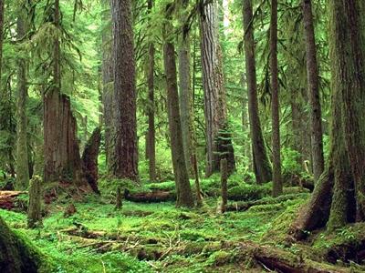 Question environnement: la forêt
