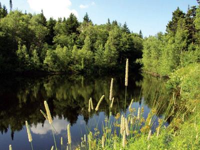 Centre de bien-être, de détente et de ressourcement Sylvie Poisson au coeur de la nature québécoise