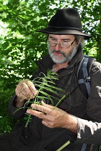 Stages «Découverte et utilisation des plantes sauvages comestibles et médicinales» – Auvergne