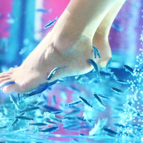 Beauté des pieds : laissez faire les poissons ! :)