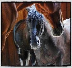 Comment développer son bien-être grâce aux chevaux ? Qu'apportent-il de différent ?