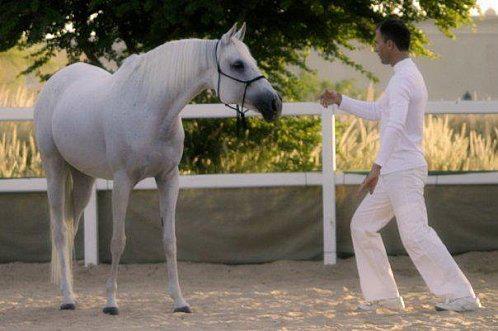 Le développement personnel facilité par les chevaux