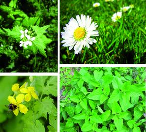 A la découverte des plantes sauvages.