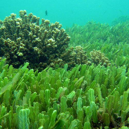La Chlorelle, une algue millénaire aux bienfaits exceptionnels.