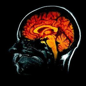 A la découverte du cerveau humain