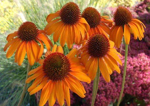 Renforcez votre immunité grâce aux plantes