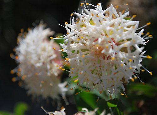 Les élixirs floraux et la mondialisation