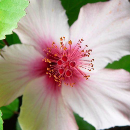 Les fleurs de Bach, un élixir floral