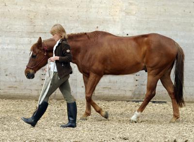 Sylvie_Volery_Horse_Coaching