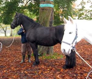 Notre guérison avec les chevaux