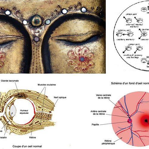 Yoga – Chérissons nos yeux avec le yoga des yeux