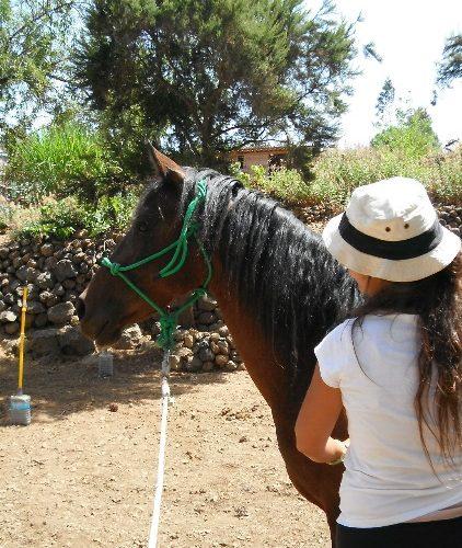 Conférence-Comment nous libérer des émotions limitantes grâce à la sagesse des chevaux-Belgique