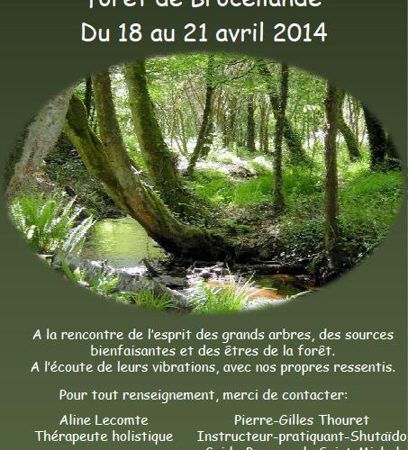 Découverte énergétique de la forêt de Brocéliande