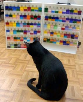 La couleur, un remontant formidable pour nos animaux