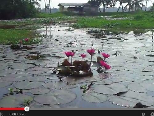 Méditation du monde sur un fleuve au Kérala-Inde