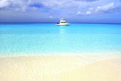 Séjour éveil et dauphins sauvages aux bahamas