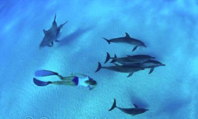 Tantra et dauphins en mer rouge