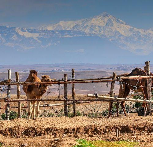 Terre des Etoiles-Lieu pour stage en développement personnel-Maroc