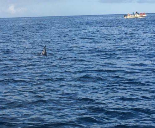 Nage avec les dauphins à l'île maurice