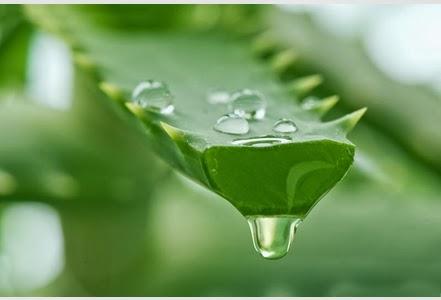 Des produits naturelles pour vous aider à stimuler votre système immunitaire