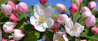 Virgnie Lucet, La petite école des fleurs de BACH en région Provence-Alpes-Côte d'Azur à Cagnes-sur-mer