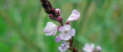 Formations agréée Fleurs de BACH en PACA