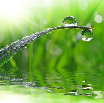 L'eau d'orage, la potion magique des temps modernes