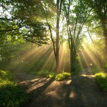Rhume : les huiles essentielles vous aident à respirer