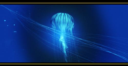 Gilles DELIEUZE – Journée d'intégration des vibrations Baleine et Béluga – à Ornaisons