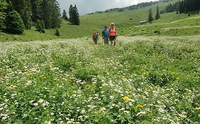 Stretching et randonnée Jura