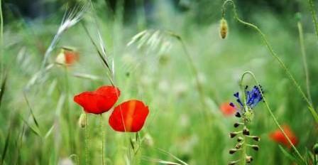 Vivre votre médiumnité en toute confiance à partir de l'Etre Intuitif que vous êtes