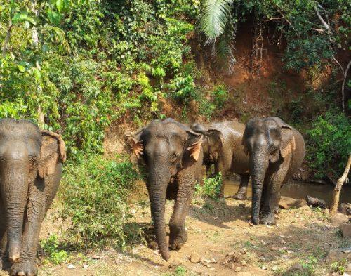 Voyage en soi sur la terre des éléphants