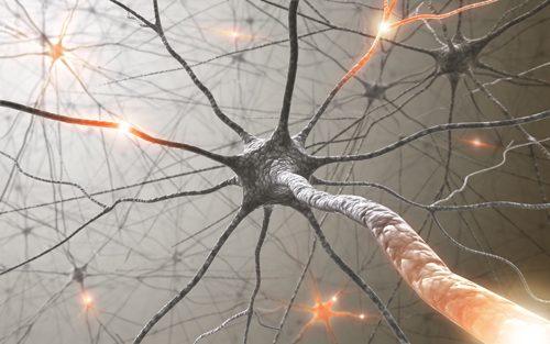 Maîtriser notre poids : les neurosciences à notre secours