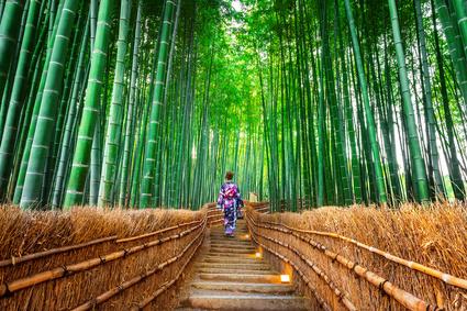 Le Kintsukuroi : L'art japonais pour réparer ses blessures