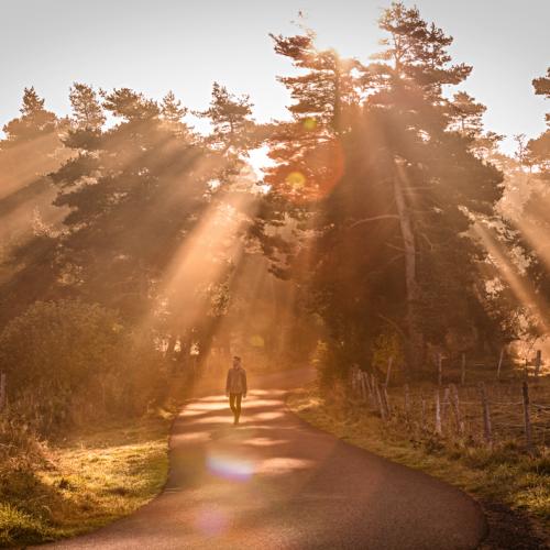 PINATELLE, TERRE DE BIEN VIVRE –  vivre l'expérience de la (re)connexion à la Nature – du 9 au 14 juin 2019