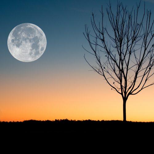 Pleine Lune du 1er octobre 2020 : Patience et optimisme, pour plus de légèreté !
