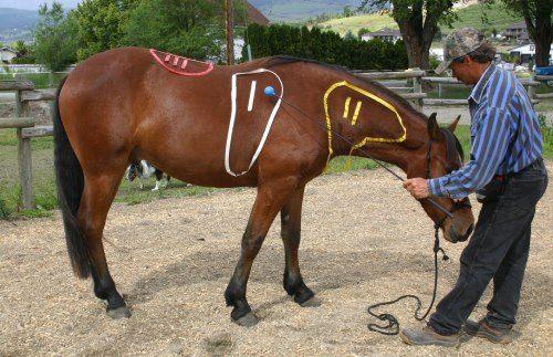 La relaxation à cheval