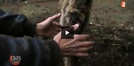 Documentaire-Guérisseurs, la main au feu