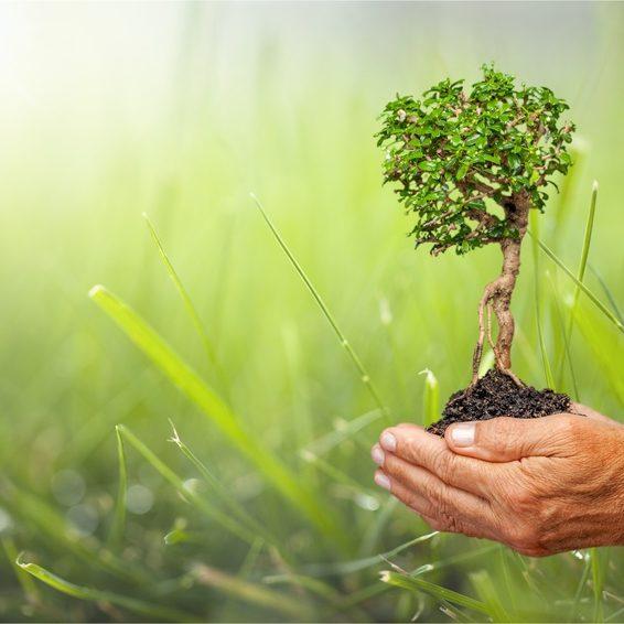 Neo-bienêtre : Produit naturel/ethique/bio