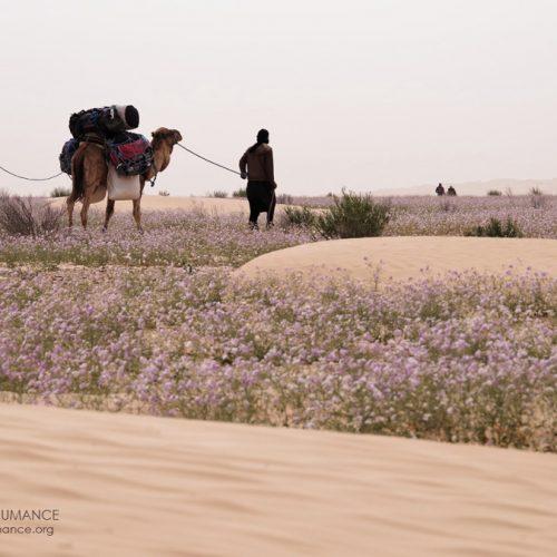 Stage Jeûne et Randonnée dans le désert tunisien
